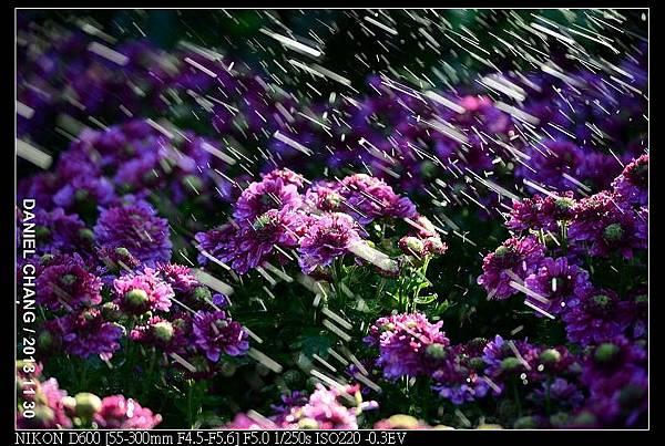 nEO_IMG_131130--Shilin Garden Festival 061-800.jpg
