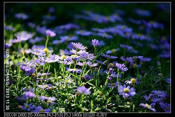 nEO_IMG_131130--Shilin Garden Festival 065-800.jpg