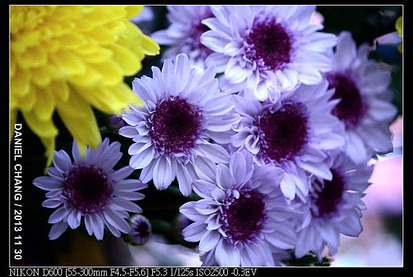 nEO_IMG_131130--Shilin Garden Festival 082-800.jpg