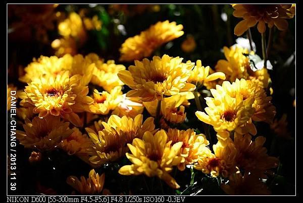 nEO_IMG_131130--Shilin Garden Festival 088-800.jpg