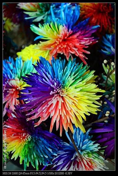 nEO_IMG_131130--Shilin Garden Festival 095-800.jpg