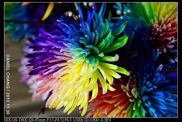 nEO_IMG_131130--Shilin Garden Festival 100-800.jpg