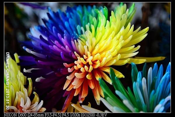 nEO_IMG_131130--Shilin Garden Festival 103-800.jpg