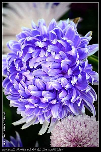 nEO_IMG_131130--Shilin Garden Festival 118-800.jpg