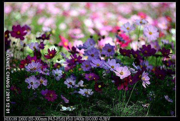 nEO_IMG_131201--Shilin Garden D600 008-800.jpg