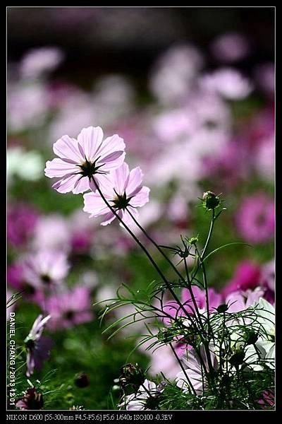 nEO_IMG_131201--Shilin Garden D600 018-800.jpg