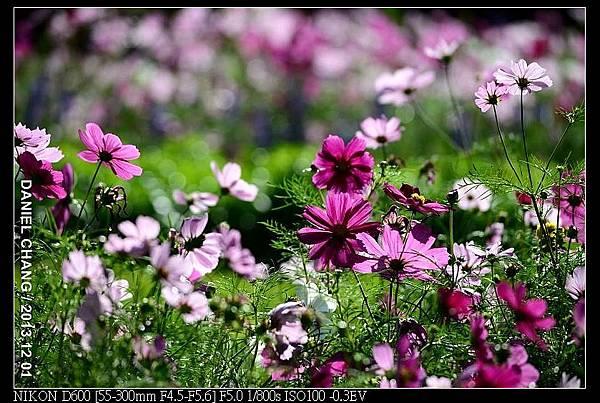 nEO_IMG_131201--Shilin Garden D600 020-800.jpg