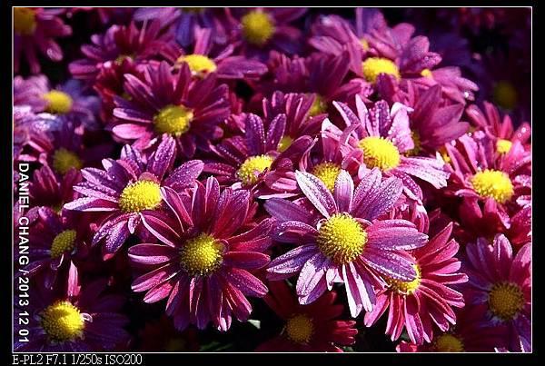 nEO_IMG_131201--Shilin Garden E-PL2 021-800.jpg