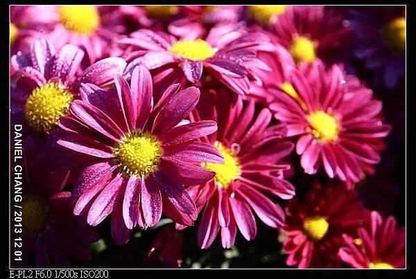 nEO_IMG_131201--Shilin Garden E-PL2 025-800.jpg
