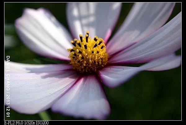 nEO_IMG_131201--Shilin Garden E-PL2 035-800.jpg