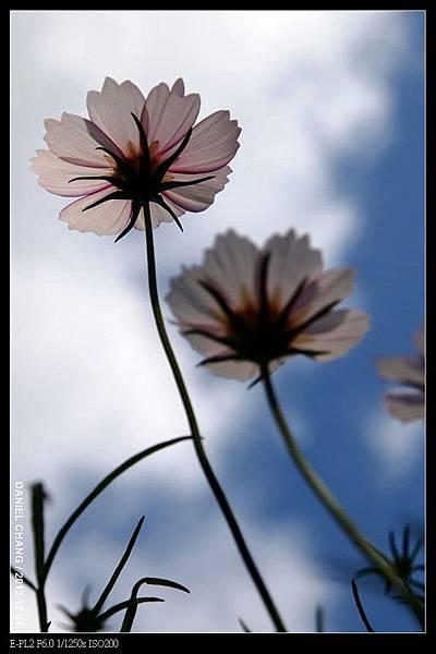 nEO_IMG_131201--Shilin Garden E-PL2 036-800.jpg