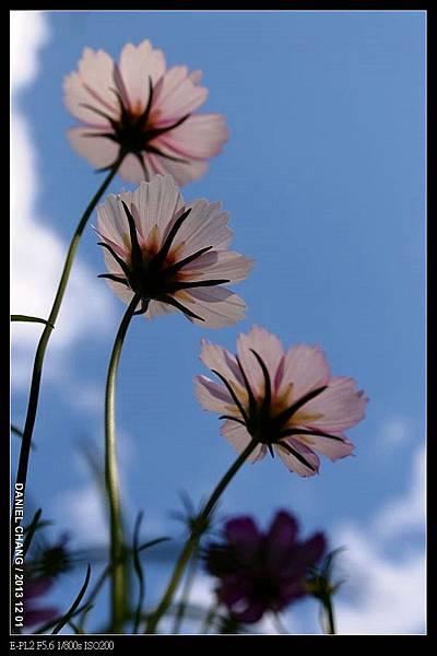 nEO_IMG_131201--Shilin Garden E-PL2 038-800.jpg