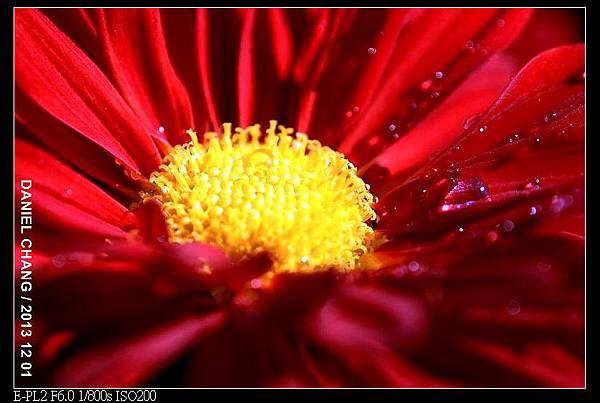 nEO_IMG_131201--Shilin Garden E-PL2 048-800.jpg