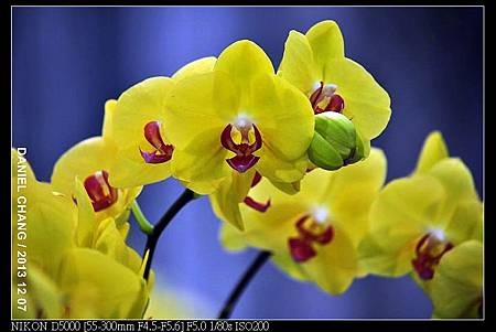 nEO_IMG_131207--Flora Art Work D5000 012-800.jpg