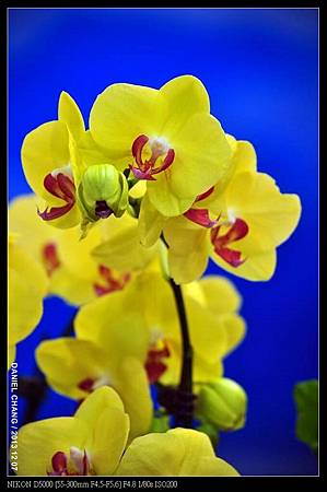 nEO_IMG_131207--Flora Art Work D5000 015-800.jpg