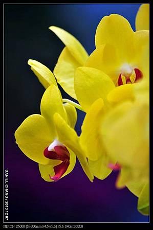 nEO_IMG_131207--Flora Art Work D5000 023-800.jpg