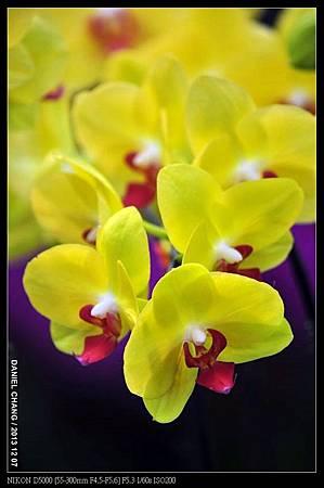 nEO_IMG_131207--Flora Art Work D5000 026-800.jpg