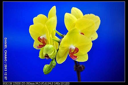 nEO_IMG_131207--Flora Art Work D5000 031-800.jpg