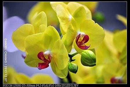 nEO_IMG_131207--Flora Art Work D5000 039-800.jpg