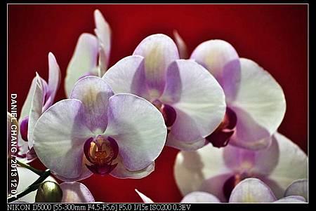 nEO_IMG_131207--Flora Art Work D5000 050-800.jpg