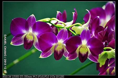 nEO_IMG_131207--Flora Art Work D5000 057-800.jpg