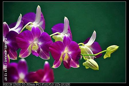 nEO_IMG_131207--Flora Art Work D5000 060-800.jpg