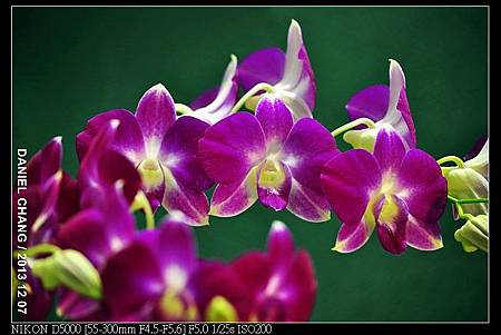nEO_IMG_131207--Flora Art Work D5000 063-800.jpg