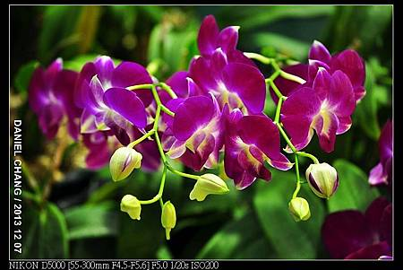 nEO_IMG_131207--Flora Art Work D5000 065-800.jpg