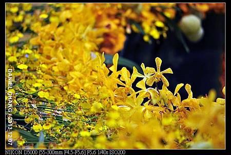 nEO_IMG_131207--Flora Art Work D5000 166-800.jpg