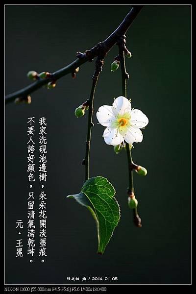 nEO_IMG_140105--Plum Blossom 095-800-Poem