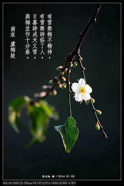 nEO_IMG_140105--Plum Blossom 107-800-Poem