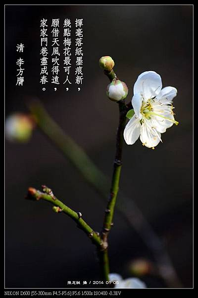 nEO_IMG_140105--Plum Blossom 120-800-Poem