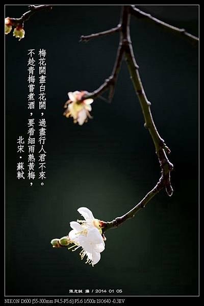 nEO_IMG_140105--Plum Blossom 164-800