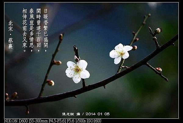 nEO_IMG_140105--Plum Blossom 024-800