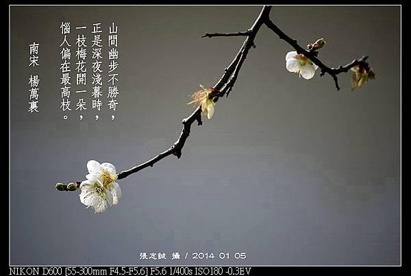 nEO_IMG_140105--Plum Blossom 162-800
