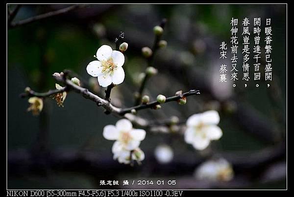 nEO_IMG_140105--Plum Blossom 040-800