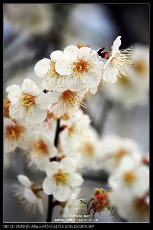 nEO_IMG_140118--Plum ShiLin Garden 003-800.jpg