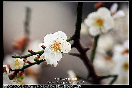 nEO_IMG_140118--Plum ShiLin Garden 005-800.jpg