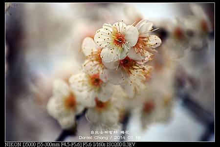nEO_IMG_140118--Plum ShiLin Garden 007-800.jpg