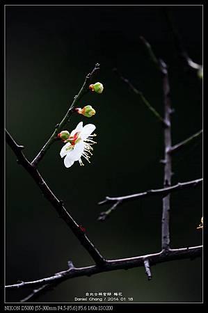 nEO_IMG_140118--Plum ShiLin Garden 011-800.jpg