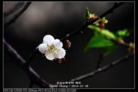 nEO_IMG_140118--Plum ShiLin Garden 026-800.jpg