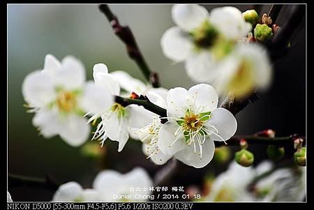 nEO_IMG_140118--Plum ShiLin Garden 035-800.jpg
