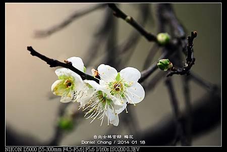 nEO_IMG_140118--Plum ShiLin Garden 039-800.jpg