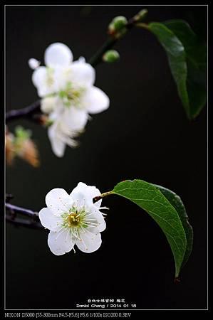 nEO_IMG_140118--Plum ShiLin Garden 047-800.jpg