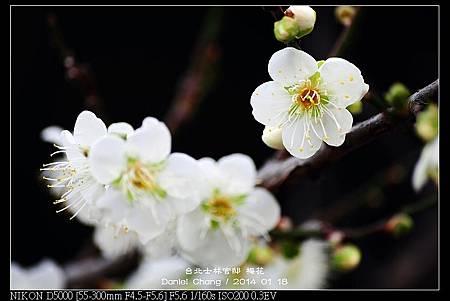 nEO_IMG_140118--Plum ShiLin Garden 051-800.jpg