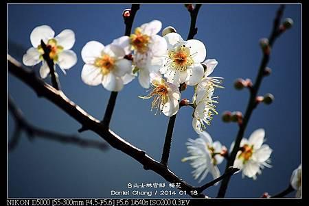 nEO_IMG_140118--Plum ShiLin Garden 058-800.jpg