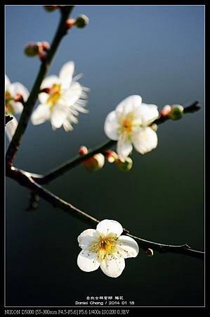 nEO_IMG_140118--Plum ShiLin Garden 062-800.jpg