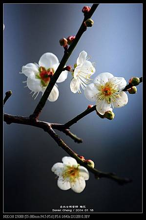 nEO_IMG_140118--Plum ShiLin Garden 065-800.jpg