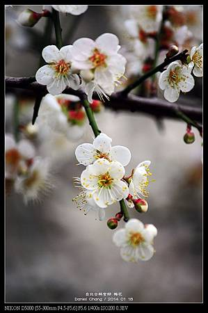nEO_IMG_140118--Plum ShiLin Garden 073-800.jpg