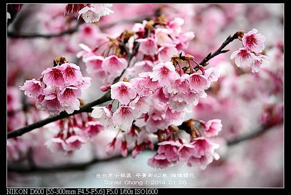 nEO_IMG_140126--Cherry blossom 033-800.jpg